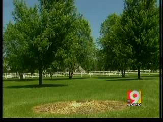 New beetle damaging trees in Clermont County