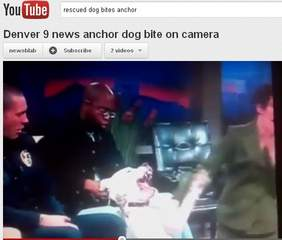 Rescued dog bites TV anchor