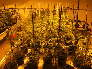 Marijuana grow room_20120716144049_JPG