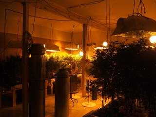 Marijuana grow room_20120716144035_JPG