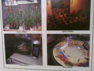 Marijuana plants that were discovered in Norwood and Blue Ash homes_20120716125351_JPG