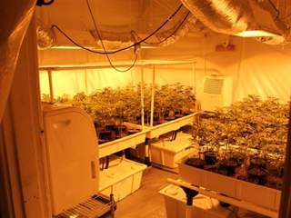 Marijuana grow room_20120716144033_JPG
