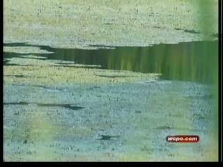 Algae, dead fish plague N.Ky. pond