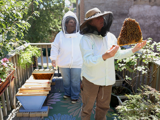 Honey bee loss sparks revival of age-old trade