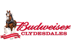 Budweiser Clydesdales won't be in holiday promos
