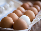Kentucky can't sue California over egg law