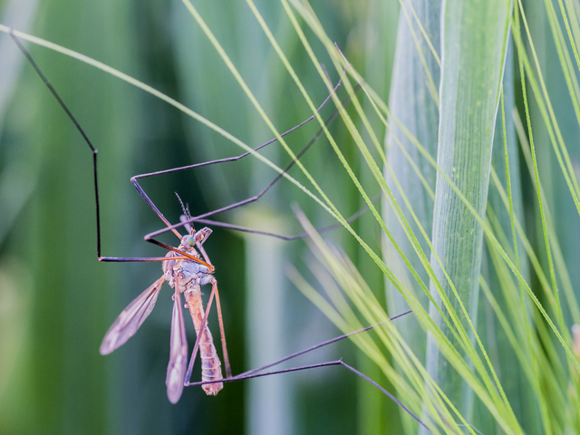 McHenry County reports first West Nile virus case of year