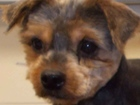 Ohio ballot issue could block puppy mills