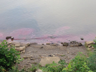 EPA: 'Excellent' improvement after fuel spill