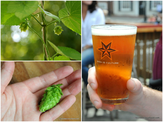 OPINION: Stop calling your beer 'hoppy'