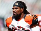 Bengals have to get along without Burfict