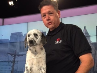 Pet Pals: Lovable Macie in need of home