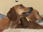 VIDEO: 2 pups return home days after running off