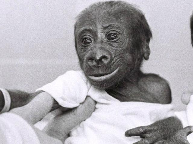 'Grand ol' lady of the Cincinnati Zoo' turns 45