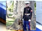 'Battle Buddy' dogs help veterans with PTSD