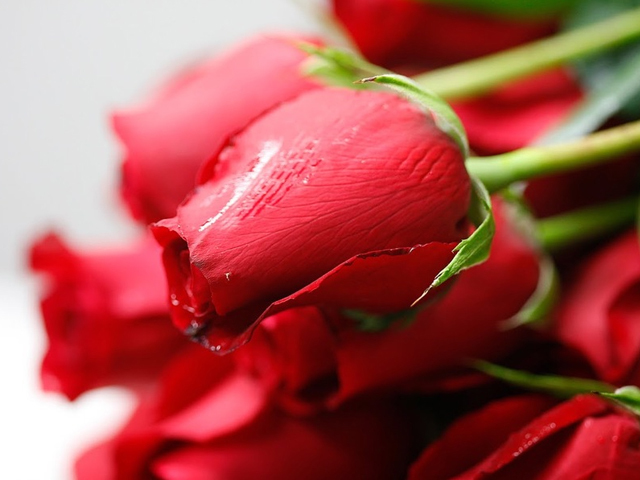 Who has the best Valentine's roses for less?