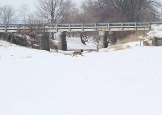 Missing Wilmington K9 officer found near I-71