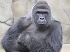 Cincinnati Zoo rejoins Twitter