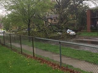 Woman killed when tree falls on car in Bond Hill