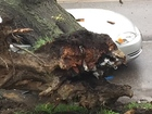 Arborist: City should have heeded warning signs