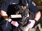 Prosecutor: Shooting K-9 cop should be a felony
