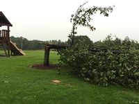 Strong storms uproot trees, damage homes in NKy