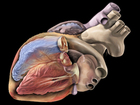 Your heart might be older than you are