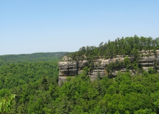 Falling tree kills Boy Scout at Red River Gorge