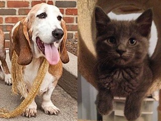 Tri-State pets in search of