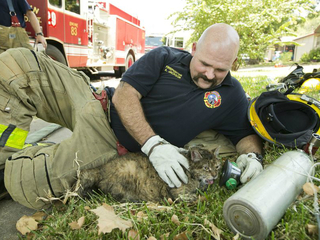Bill would allow EMTS to treat animals