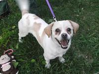 Pet rescue raid delays dog adoption