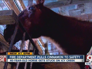 Fire, EMS save 40-year-old horse from icy creek