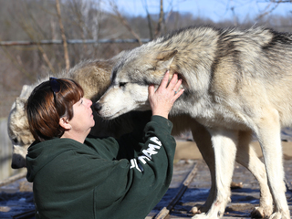 Local wolf sanctuary on mission to change minds