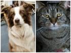No joke: KY dog, cat enter presidential race