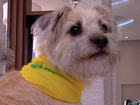 WATCH LIVE: Tri-State dog competes in Puppy Bowl