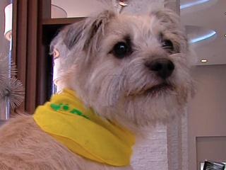Meet the local pooch headed to the Puppy Bowl