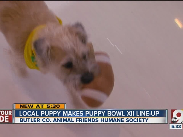 Local dog vies for 'Most Valuable Puppy' at Puppy Bowl XII