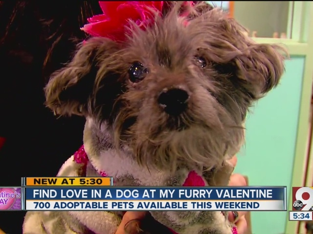 Find the four-legged love of your life on Valentine's Day