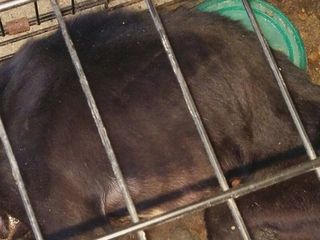 Sheriff: Dog starved in cage, thrown In dumpster
