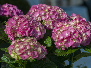 Burglar makes off with unusual score: flowerpots
