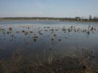 Zoo working to breathe new life into wetlands
