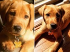 Couple says dog trainer lost their puppy
