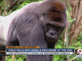 Zoo's gorilla killed after child falls in cage