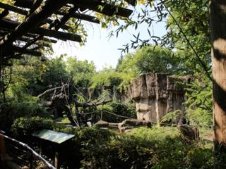 Cincinnati Zoo kills gorilla to protect child