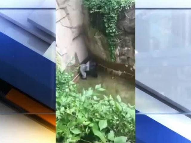 Child falls into Cincinnati Zoo gorilla enclosure