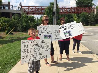 PETA blames captivity for gorilla's death