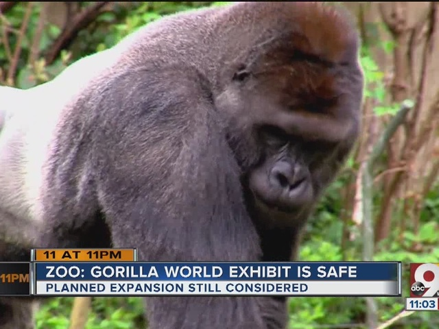 Gorilla World exhibit is safe, Cincinnati Zoo director says
