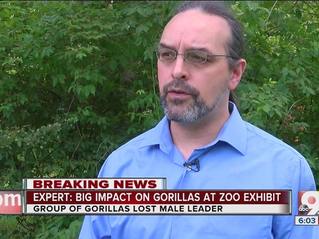 Gorilla's death will have big impact on rest of family