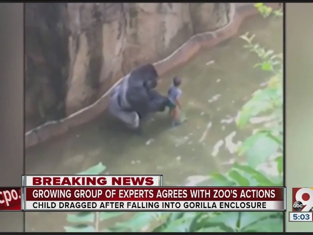 MU primatologist joins growing list of experts defending zoo's decision…