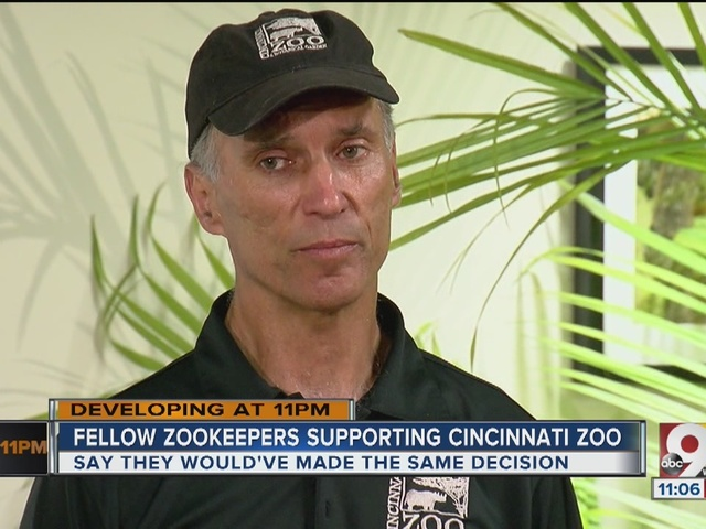 You can't take a risk with a silverback gorilla, Cincinnati Zoo director says